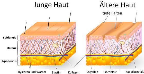 Hautverjüngung durch Anti-Aging Behandlung